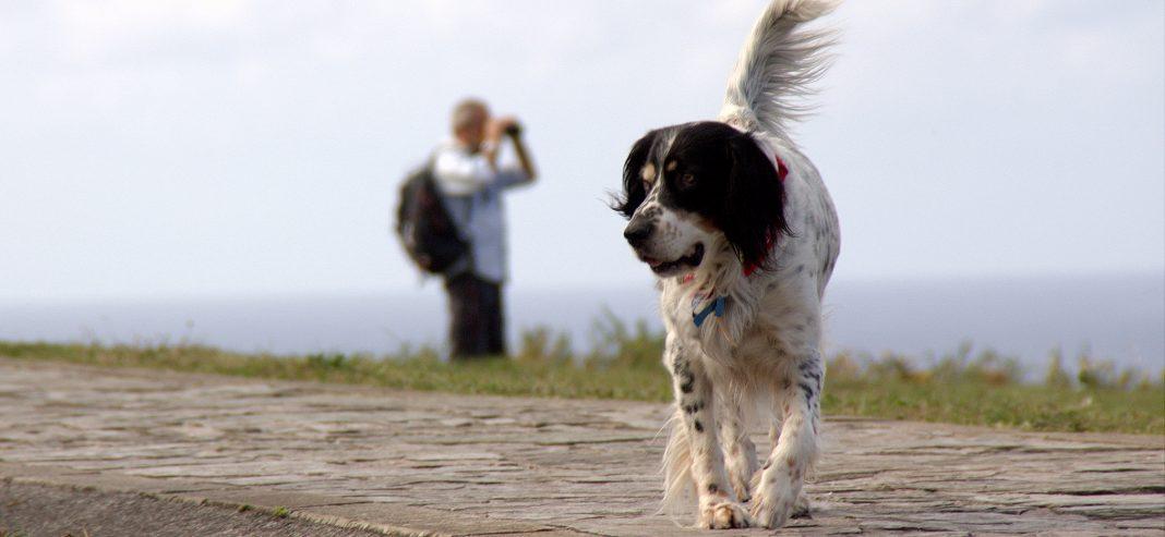 Un perro corriendo por La Providencia