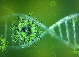 Vista al microscopio del coronavirus